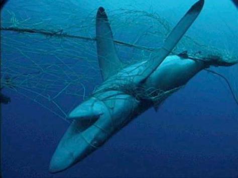Sobreexplotacion pesquera