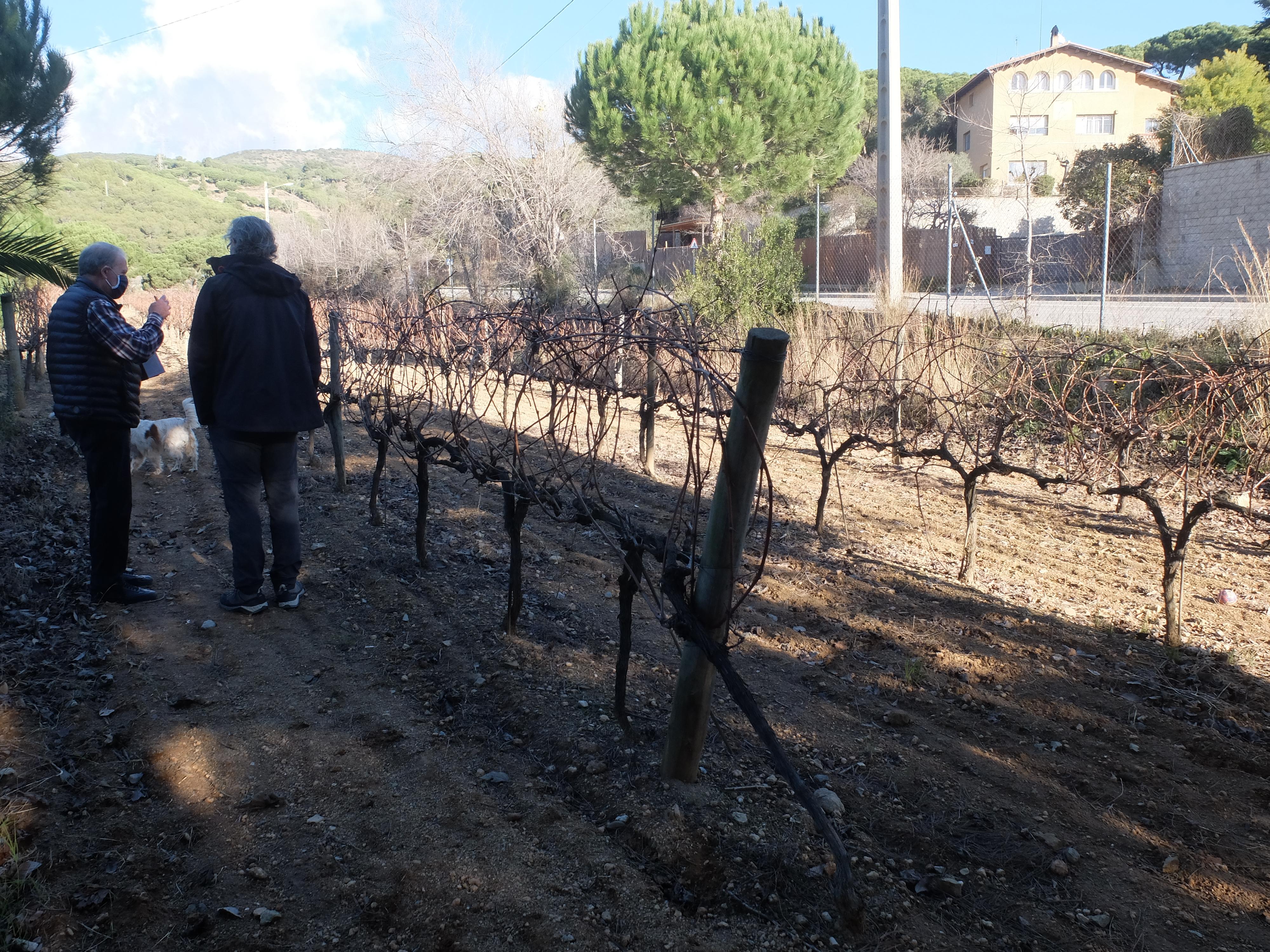 Clase magistral de Josep Coll sobre el terreno, Masia Coll - Canyet (Badalona)