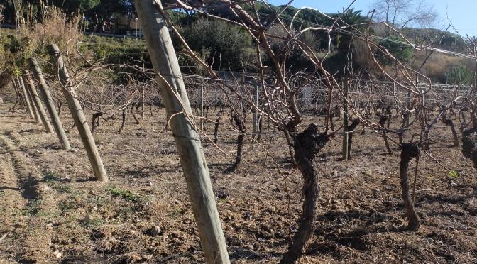 Orígens, el vino de Badalona